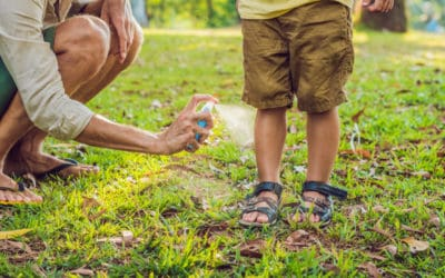 Insect Bites to Avoid This Summer