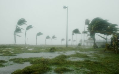 Hurricane and Disaster Preparedness in Florida